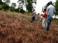 Honduras-Cultivos e segurança alimentar em risco pela seca. 22845.jpeg