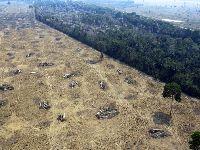 Agronegócio domina regiões desmatadas e queimadas na Amazónia. 31845.jpeg