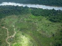 Desmatamento, invasões e incêndios ameaçam Áreas Protegidas no Xingu. 31849.jpeg
