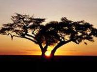 Viagem ao universo africano