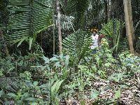 Centenas de invasores entram na Terra Indígena Uru-Eu-Wau-Wau e preparam derrubada da floresta. 30862.jpeg