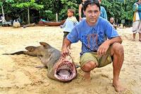 Na praia mataram tubarão de dois metros de comprimento (foto)