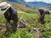 Três camponeses assassinados na Colômbia em menos de 24 horas. 27872.jpeg