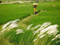 Revolução Verde africana para alimentar o continente