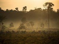Cientistas europeus exigem que respeito aos povos indígenas seja base de acordo com Brasil. 30885.jpeg