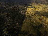 Governo brasileiro suspende operações contra desflorestação e queimadas. 33886.jpeg