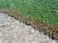 Reflexões sobre a nova lei florestal: para que queremos um cadastro ambiental rural?. 18889.jpeg