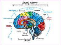 Nutrição ao cérebro. 16890.jpeg