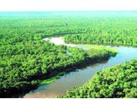 Amazônica administrada e protegida pela iniciativa privada