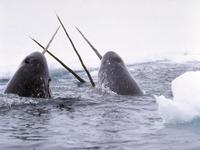 Ártico: A beligerância do Canadá e os interesses estratégicos da Rússia