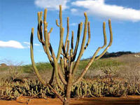 Projeto São Francisco protege biodiversidade da caatinga