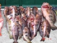 Brasil troca conhecimentos técnicos no setor de pesca com Reino Unido e Noruega