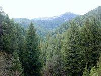 Novos desafios da investigação florestal. 25900.jpeg