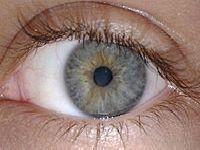 Olhos: Enxergar mal prejudica aprendizado. 25901.jpeg