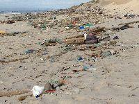 Brigada do Mar limpa 45 kms de praia na costa alentejana. 30904.jpeg