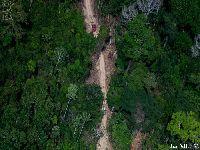 Madeireiros avançam sobre o Riozinho do Anfrísio. 27907.jpeg