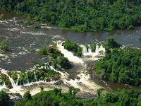 Gado criado ilegalmente na Amazônia vai a leilão pela Conab