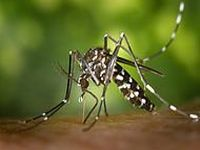 Brasil: Casos de Dengue triplicam. 17932.jpeg