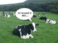 Alterações Climáticas: O estranho caso das vacas e dos orégãos