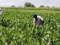 CNA promove debate sobre importância da agricultura familiar. 34954.jpeg