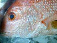 Brasil abre as águas da União para criação de pescado