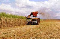 Brasil produzirá diesel a partir de cana-de-açúcar