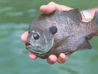Peixes alistados na Guerra ao Terror