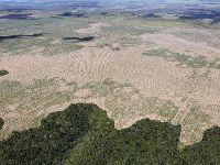 Com apoio de ruralistas, comissão aprova anistia a desmatamentos ilegais. 30962.jpeg