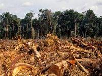 Jogo de cena das empresas e bancos em relação ao desmatamento. 33964.jpeg