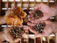 Proposta de incentivo a bancos de sementes e mudas tradicionais avança na Câmara. 22970.jpeg