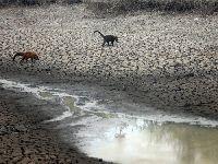 Pantanal sofre o pior período de queimadas dos últimos 50 anos. 34970.jpeg