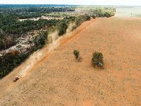 Relatório ruralista com nova anistia a desmatamentos pode ser votado no Congresso. 30971.jpeg