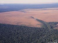 Lei de floresta zeraria desmate na Amazônia. 22982.jpeg