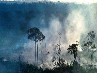 Nos EUA, cientistas brasileiros denunciam ataques aos povos indígenas. 31990.jpeg