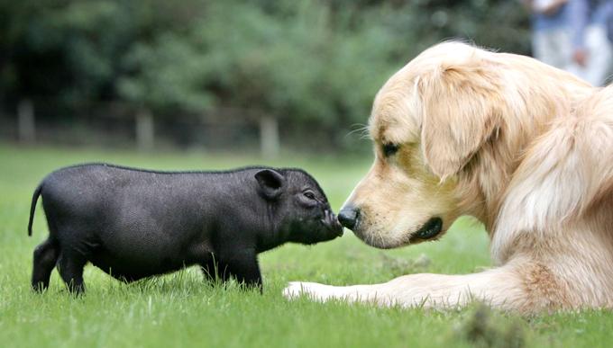 O cão é amigo não só para o homem O cão é amigo não só para o homem. Fotos: Fotodom.ru/Rex Features