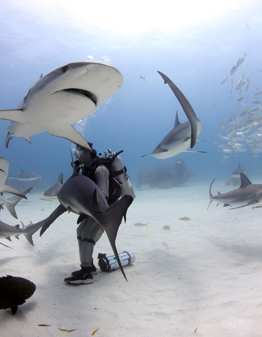 Tubarões também gostam de carícias Especialista em tubarões Riccardo Sturla Avogadriutiliza uma técnica de hipnose que consiste em induzir um estado profundo de relaxamento. Para tanto, ele acaricia o focinho do tubarão até perceber que o animal se encontra em um estado praticamente inconsciente, uma espécie de transe. Fotos Fotodom.ru/Rex Features.