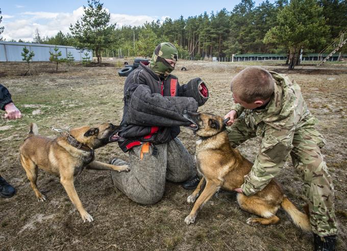 Cães de guerra continuam o serviço na Rússia O Exército russo continua  treinar cães para serem utilizados numa querra. Documentos de arquivo contam a história do cão Rex, que sob bombardeio nadou pelo gélido rio Dnieper três vezes em um dia para entregar importantes documentos militares.Entre os que tiveram a honra de participar estava Dzhulbars, um cachorro que foi famoso na época. Nascido com a incrível habilidade de detectar explosivos com o seu olfato, Dzhulbars salvou tesouros arquitetônicos em Praga, Viena, Hungria e Romênia. O cão havia se ferido e proibido de participar do desfile, até que Stalin ordenou que Dzhulbars fosse carregado pela Praça Vermelha em seu próprio casaco.  Fotos Fotodom.ru/Rex Features.