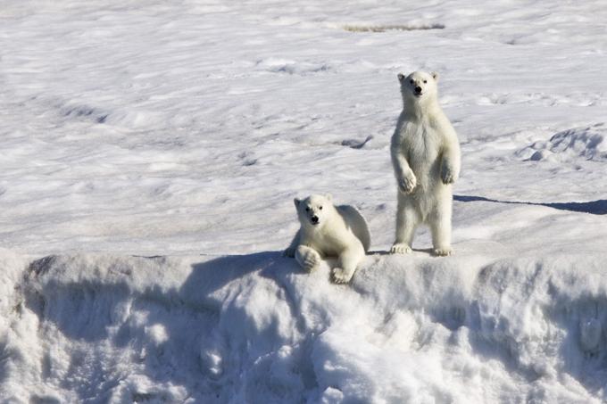 Ilha de Spitsbergen protege as plantas da Terra Spitsbergen tem o banco de sementes mais vigiado do mundo.Com mais de 250 milhões de sementes vindas de todo o mundo e cuidadosamente embaladas em pacotes embrulhados e lacrados em material resistente.Há um motivo pelo qual os cientistas escolheram Spitsbergen para abrigar o banco de sementes: a ilha não é atingida por atividades tectônicas, tem um solo de permafrost (que ajuda na conservação) e está a 130 metros acima do nível do mar, o que garante que o local continuará seco mesmo se o aquecimento global provocar o derretimento das calotas polares.©Fotodom.ru/Rex Features