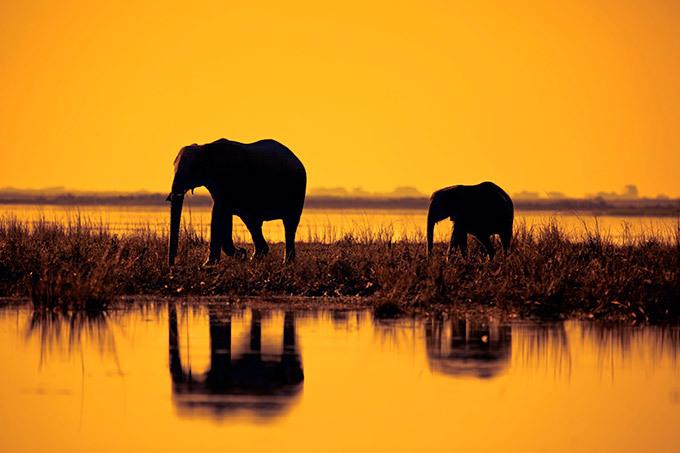 As maravilhas da África Fotógrafo Mario Moreno visitou África do Sul, Botswana e Tanzânia. As imagens mostram a biodiversidade do continente negro que é extasiante. Todas as fotos: Splash / All Over