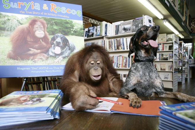 Verdadeira amizade entre orangotango e cão