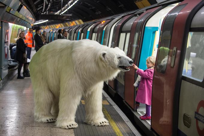 Protótipo de urso anda pelas ruas de Londres Um urso polar que andou a passear pela cidade  de Londres. Apesar da semelhança à realidade, este urso é apenas um protótipo que faz parte de uma experiência para a Sky Atlantic TV.O urso, uma réplica deste carnívoro, foi criado em seis semanas e com 60 tipos de material.Durante a sua visita a Londres foi controlado por dois marionetistas que fizeram as delícias daqueles que tiveram a oportunidade de ver de perto o  animal .( Fotos Splash/All Over Press)