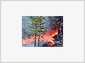 Os incêndios florestais ganham força no mundo