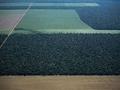 STF inicia o mais importante julgamento sobre meio ambiente da história