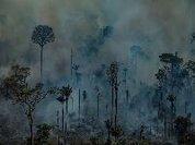 Desmatamento avança na pandemia