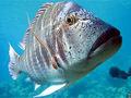 Peixes também  têm diferentes personalidades