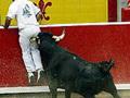 Contra a crueldade aos animais