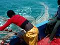 A União Europeia rouba o peixe da África?