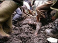 Tufão Durian causou centenas de mortes nas Filipinas