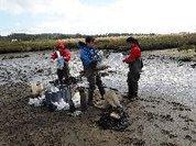 Alterações climáticas: cientistas estudam soluções para impedir o desaparecimento dos sapais estuarinos