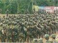 FARC: Recebimento do Conselho de Segurança das Nações Unidas